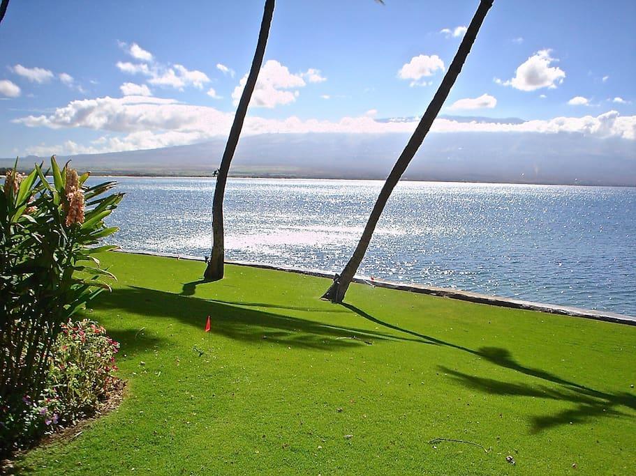 Beautiful oceanfront yard