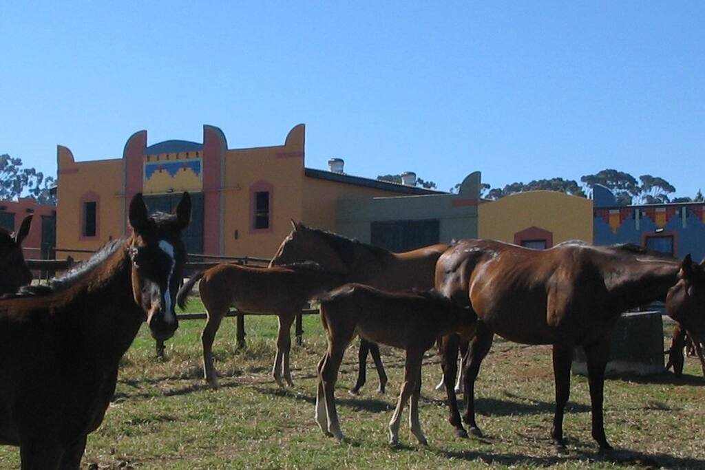 First, you will see the Main Stable with mares and foals