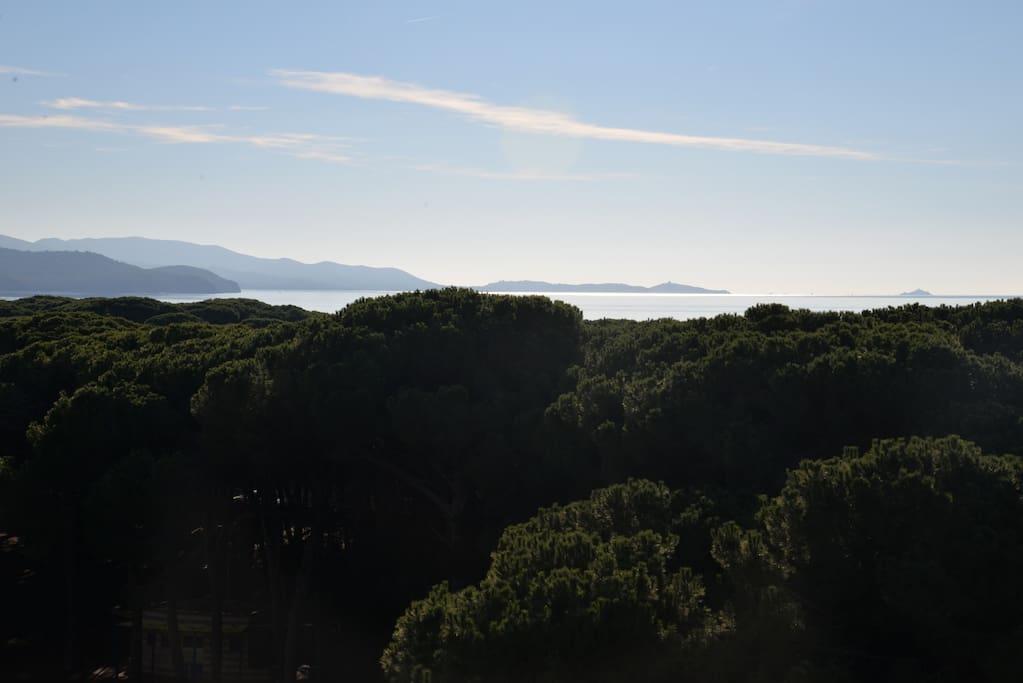 Meravigliosa vista sulla pineta e Punta Ala