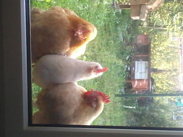 Me and my chickens - Meerhout - Casa