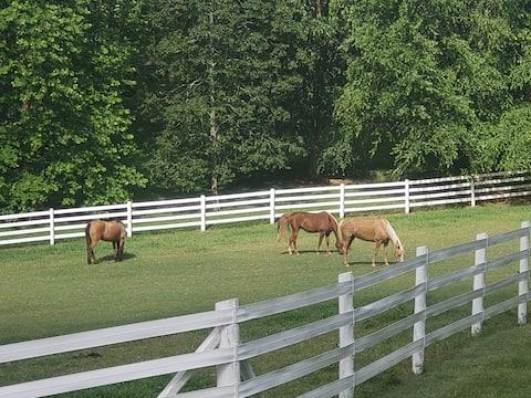 Maple Hollow Farm - A Little Piece of Heaven