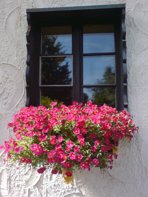 Typisch - Geranien vor dem Fenster
