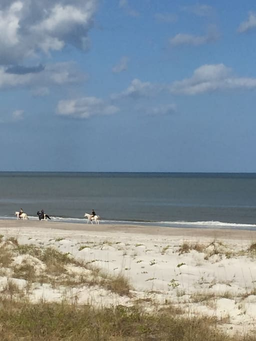 Saddle up and ride along the beach, Amelia Island's own Kelly Seahorse Ranch 904 491 5166.