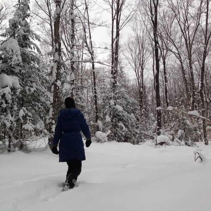 Snowshoe or ski our lake and wooded trails.