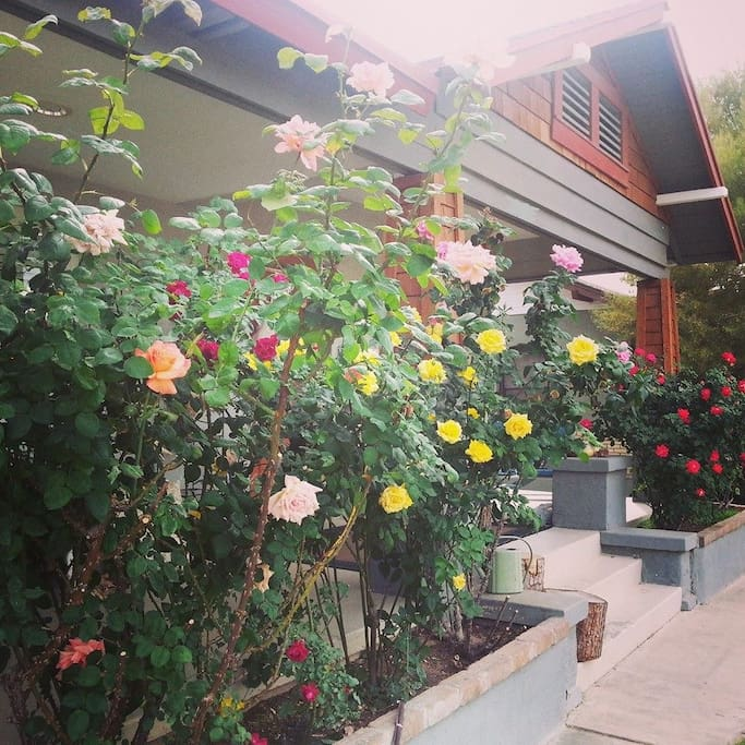 When the roses are in bloom it is a glorious sight.