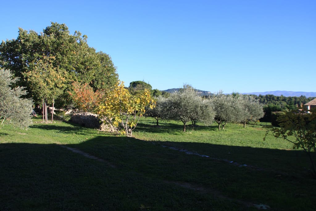 Oliviers, figuiers et cerisiers fournissent à la maisonnée les ingrédients d'une douceur de vivre.