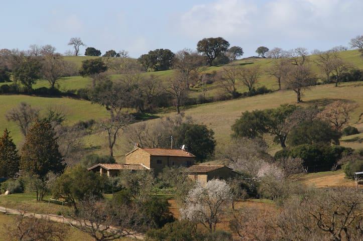 Bio Agriturismo Poggio della Spinosa - Grosseto - Holiday home