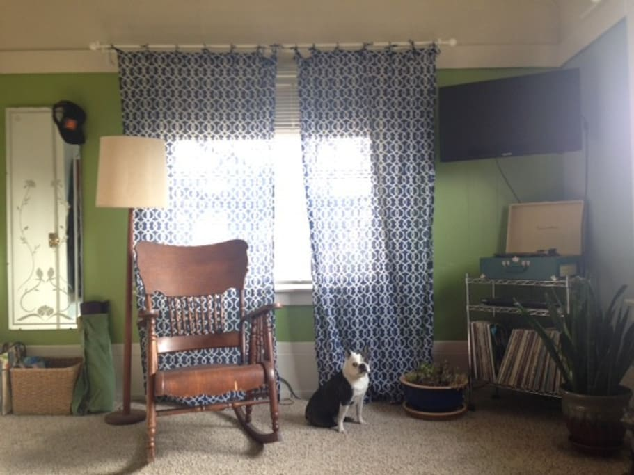 This is also the living space and my adorable Boston Terrier, Zeppelin.