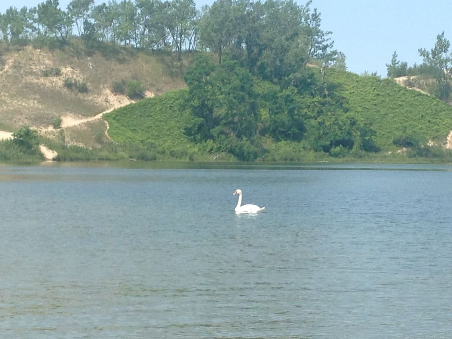 Area is home to swans and many other variety of birds and wildlife.