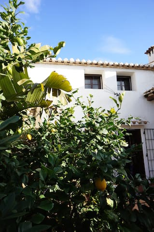 View from the bottom terrace, through the lemon tree