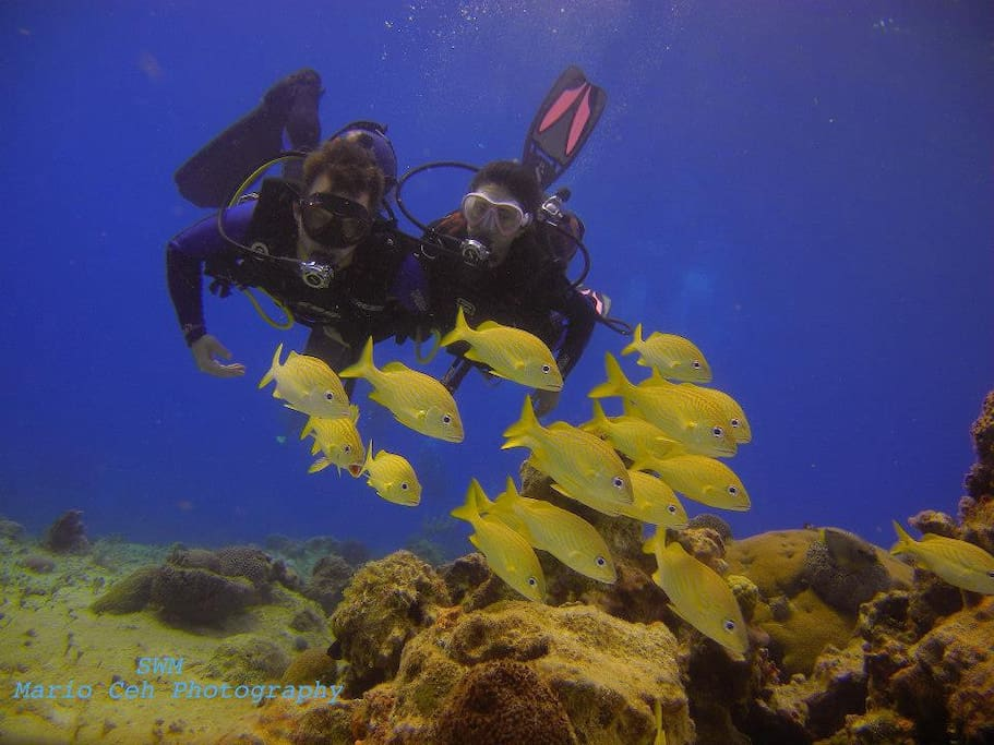 Dive with us - we will show you always a great time.