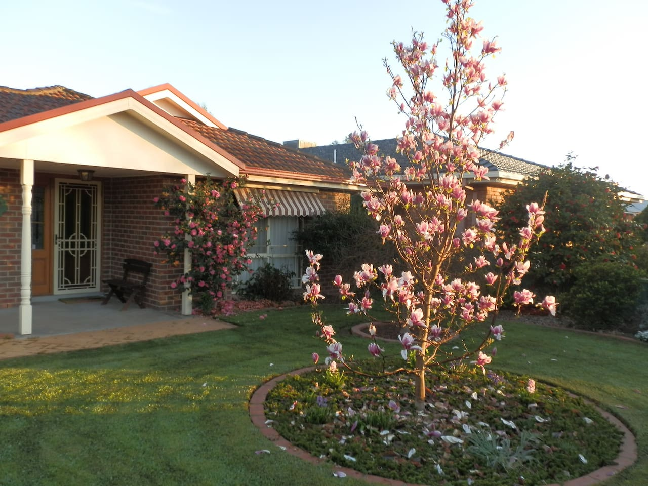Front yard in Springtime