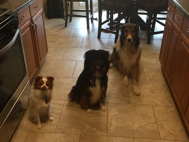 Three dogs who were bribed with  chicken jerky to pose for this photo.
