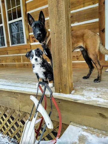 Farm doggos