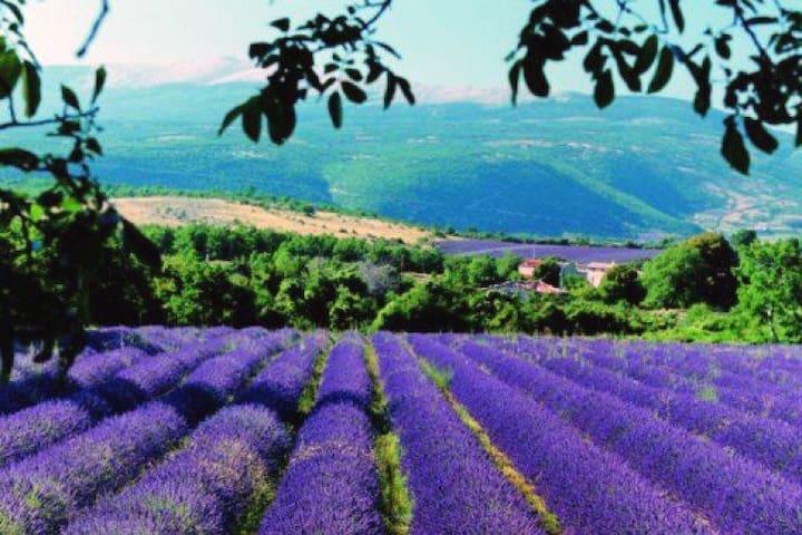 """""""La Fénière"""" Between lavender and Mont Ventoux"""