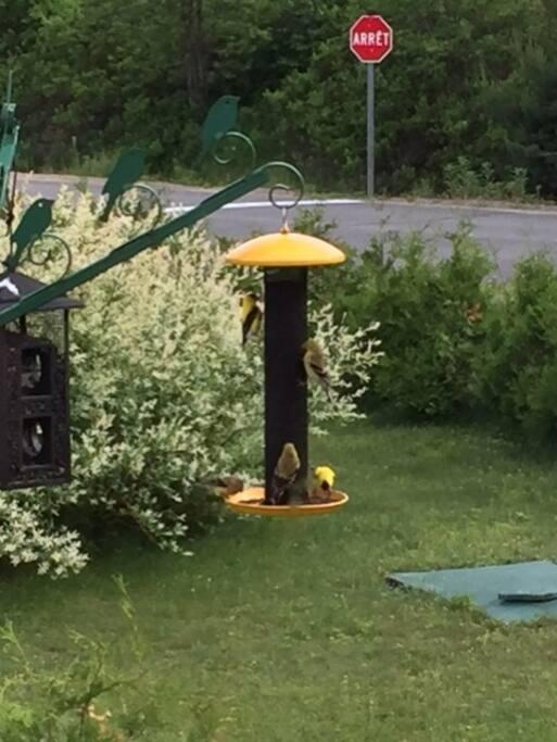 jardin avec oiseaux