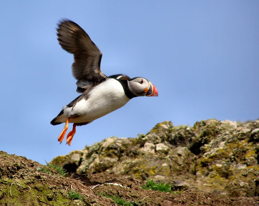 Ideal for visiting skomer island and Puffins!