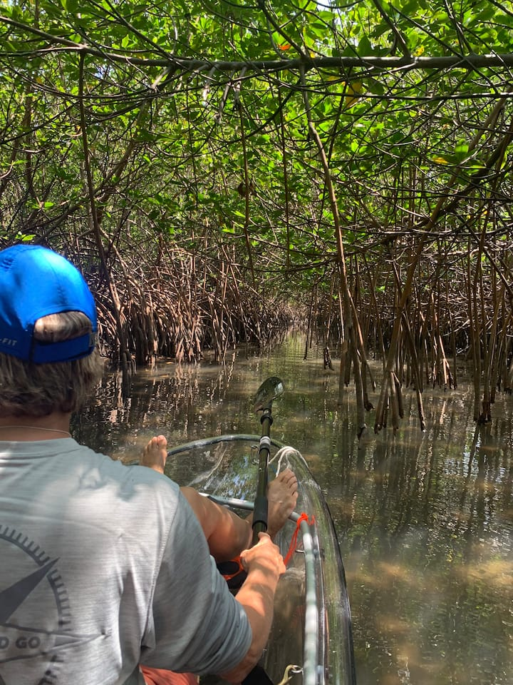 Paddling through a Jupiter mangroves