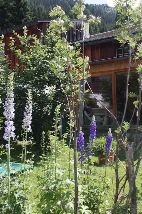 Sommer! Der Garten im Juli, auch für Gäste!