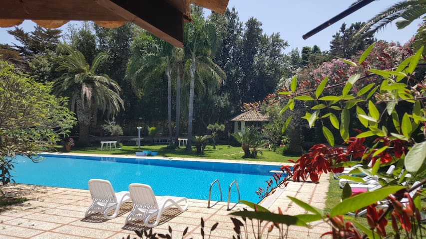 The Sunny Room with Amazing Garden and Pool