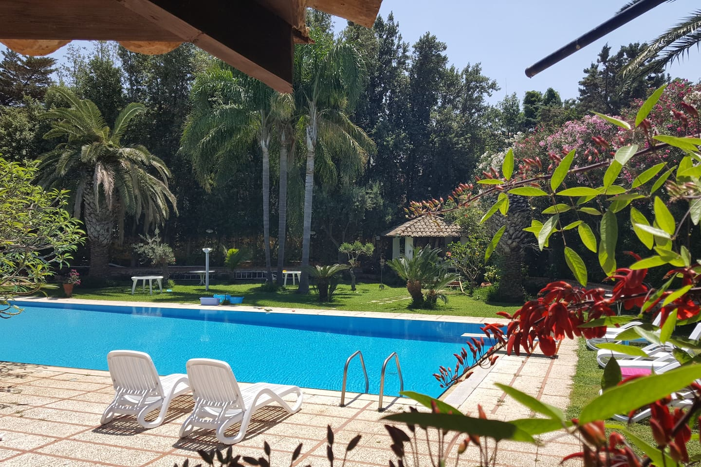 the pool is very big  measures: 22 meters x 9 . This large pool is surrounded by an incredible and magnificent garden