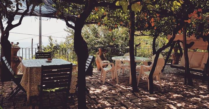 Il Limoneto degli Angeli, holidays among lemons