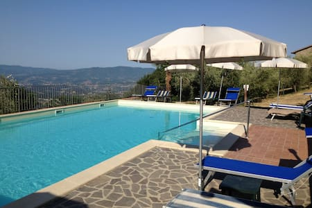 House with pool among olive trees plantation