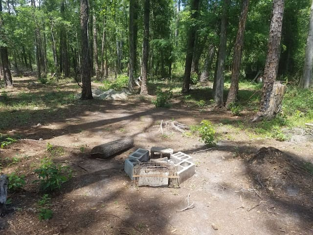 Camp on a blueberry farm. Site 2. - Jacksonville - Tente