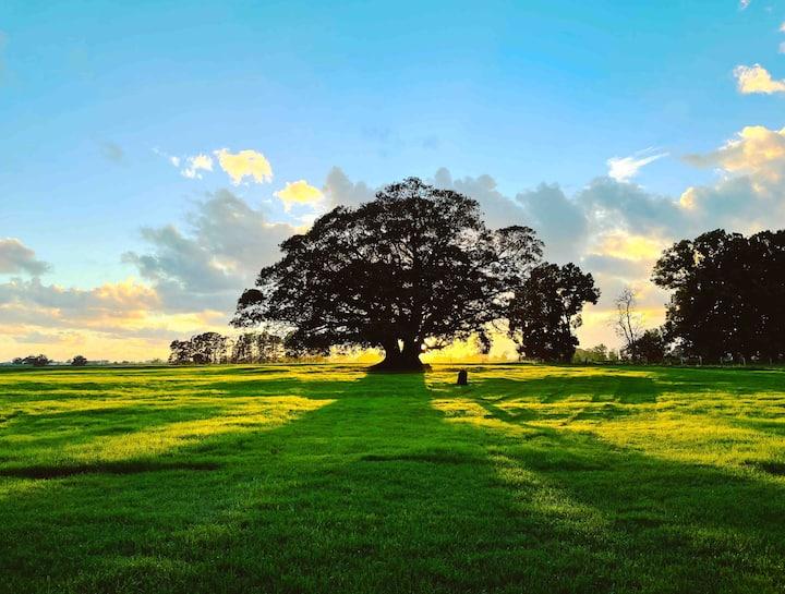Belcombe Farmstay