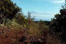 Die Finca, liegt in der Naehe des Wanderweges vom Centro de visitantes nach Las Rosas. Vom Parkplatz muss man noch 500m bergauf zum Haus laufen.