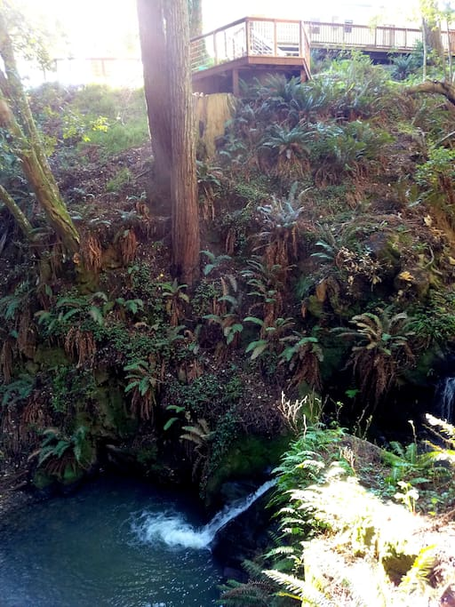 Our nature loving guests would surely love to see this magical waterfall and pond right below the hot tub! It's a little adventure for you to walk down here!  There are two pathways down to this spot from the guesthouse. Can you see a hot tub on top.?   :)