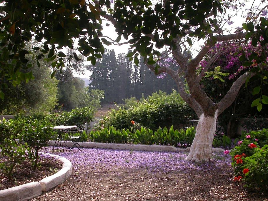 garden of hotel