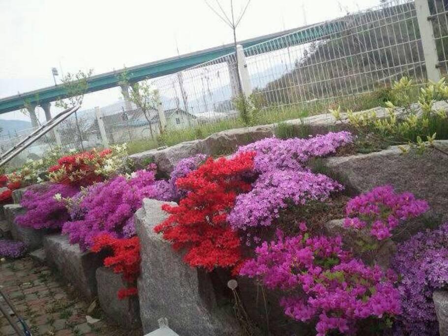 뒷마당꽃잔디