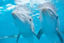 Seaworld Friends