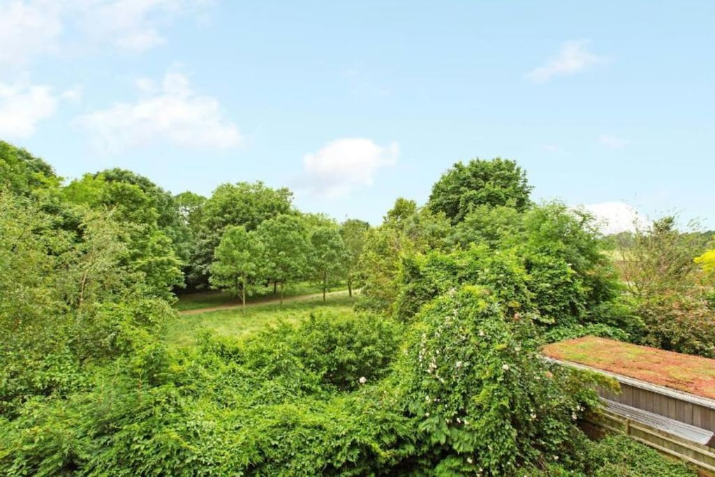 Summer view across magnificent Hampstead Heath.