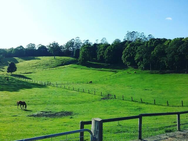 Misty Ridge Farm - Smiths Creek - Casa