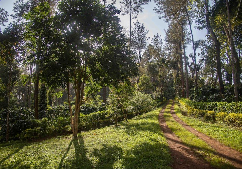 The Driveway to Shyara Land..