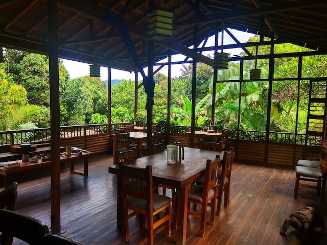 Shared Dorm in Jungle Eco-Lodge - Ritmo del Rio