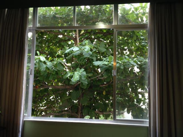 Verandah window