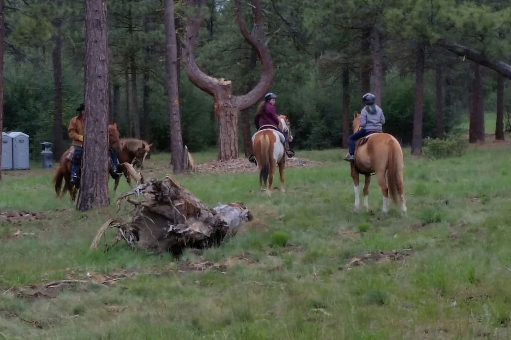 Guided horse rides beside Angel Harp Tree
