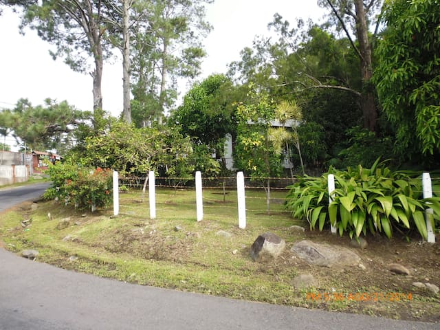 Spices and fruit trees on property