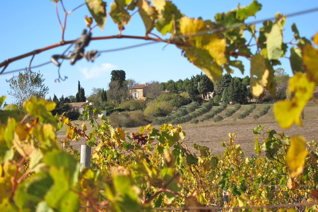 Domaine de la Bade - Surrounded by vineyards, olive grooves and sunflower fields