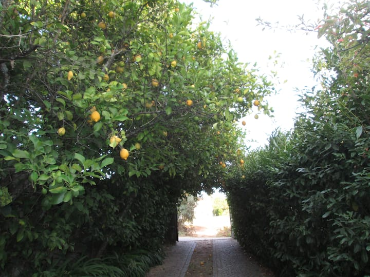 Quinta do Prado - Lic. 25710/AL