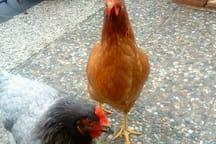 Unsere Eierlieferanten