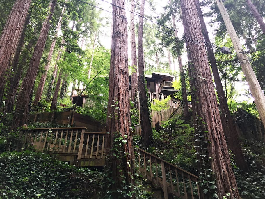 """View of the """"Tree House"""" from the road/parking area"""