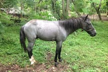 Always horsing around...