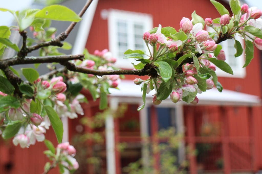 Husets västra gavel och är ingången till Stensjöängs Hemma-hos-boende.