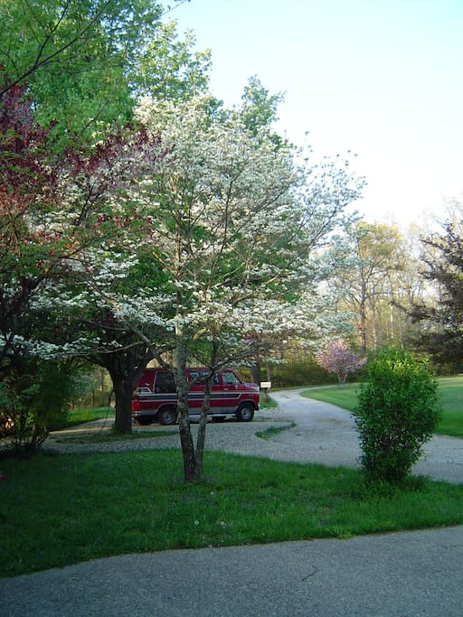 Our driveway in the spring.