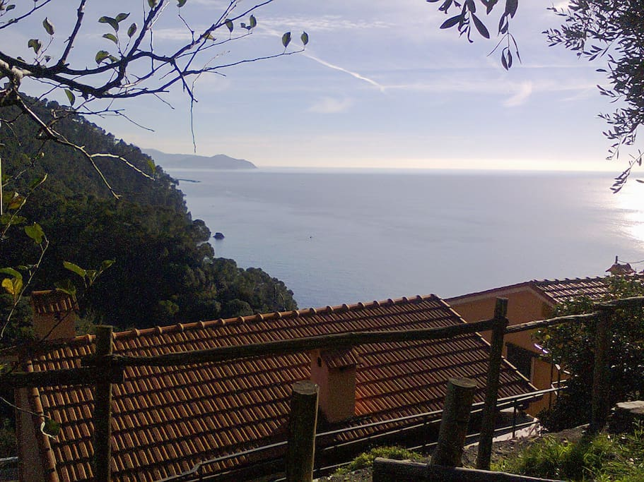View from one of the garden terraces.