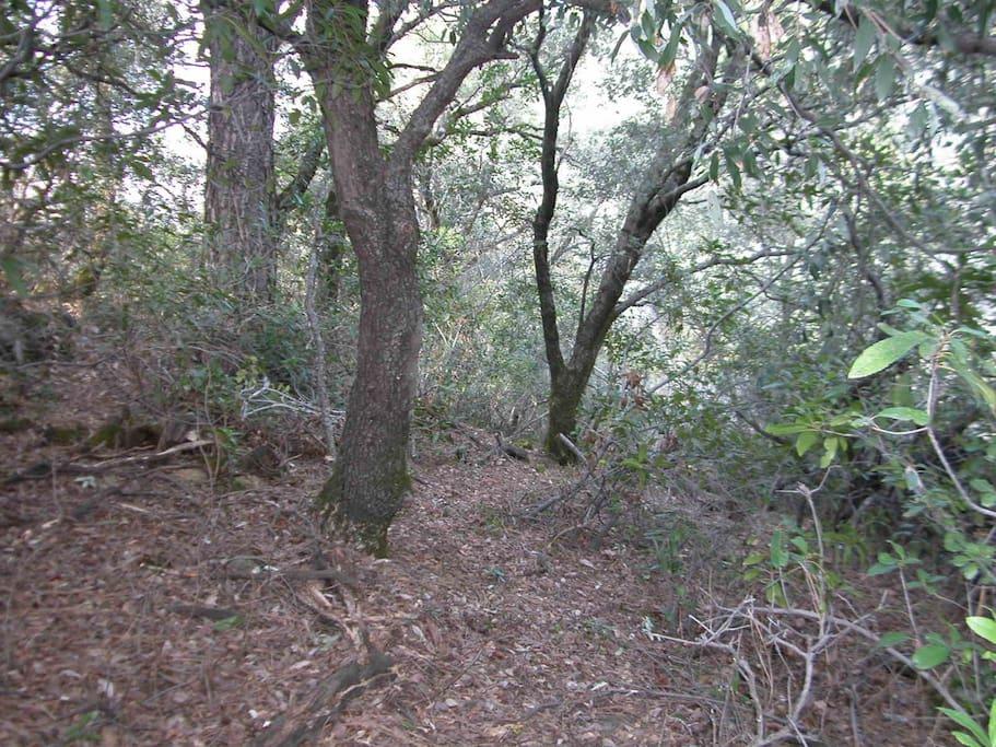 One path to the seasonal creek.